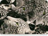 Decoration fabric, leopard, grey-black-white, 140cm